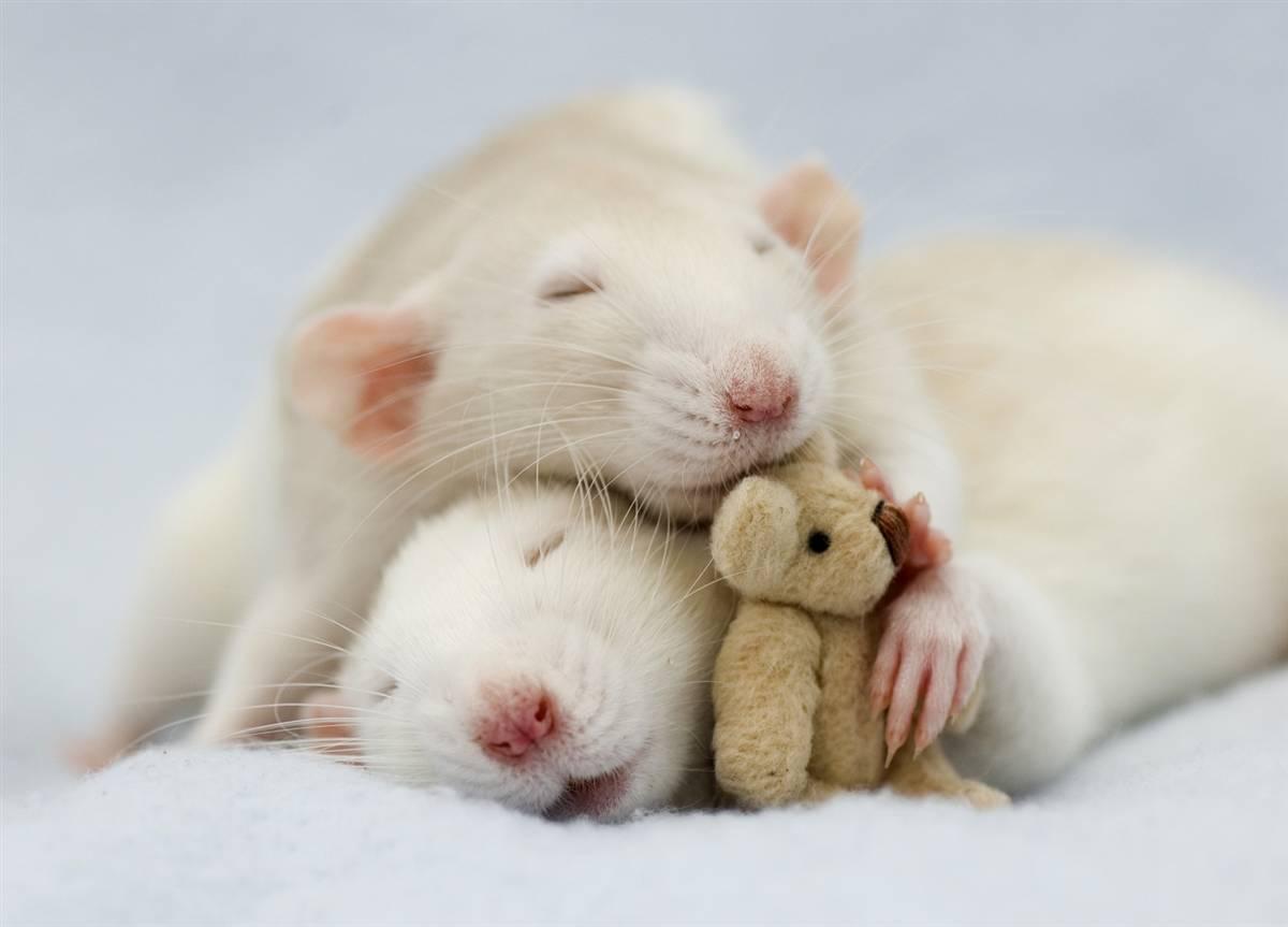 картинки с мышкой очень сильно люблю статусы
